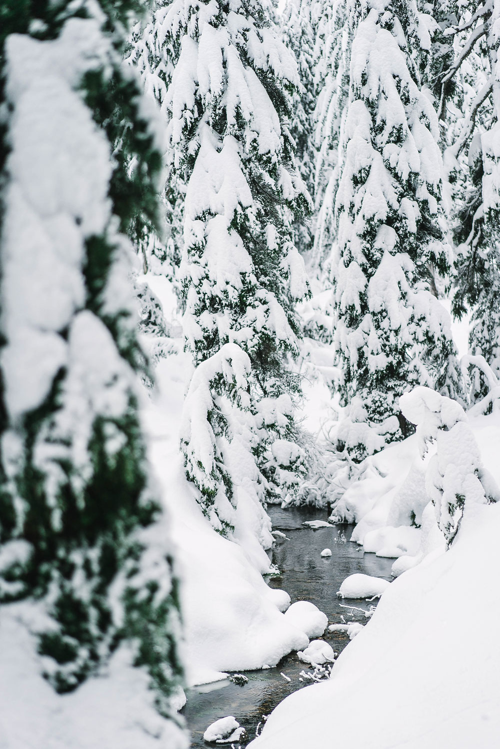 best winter ideas vancouver by To Vogue or Bust