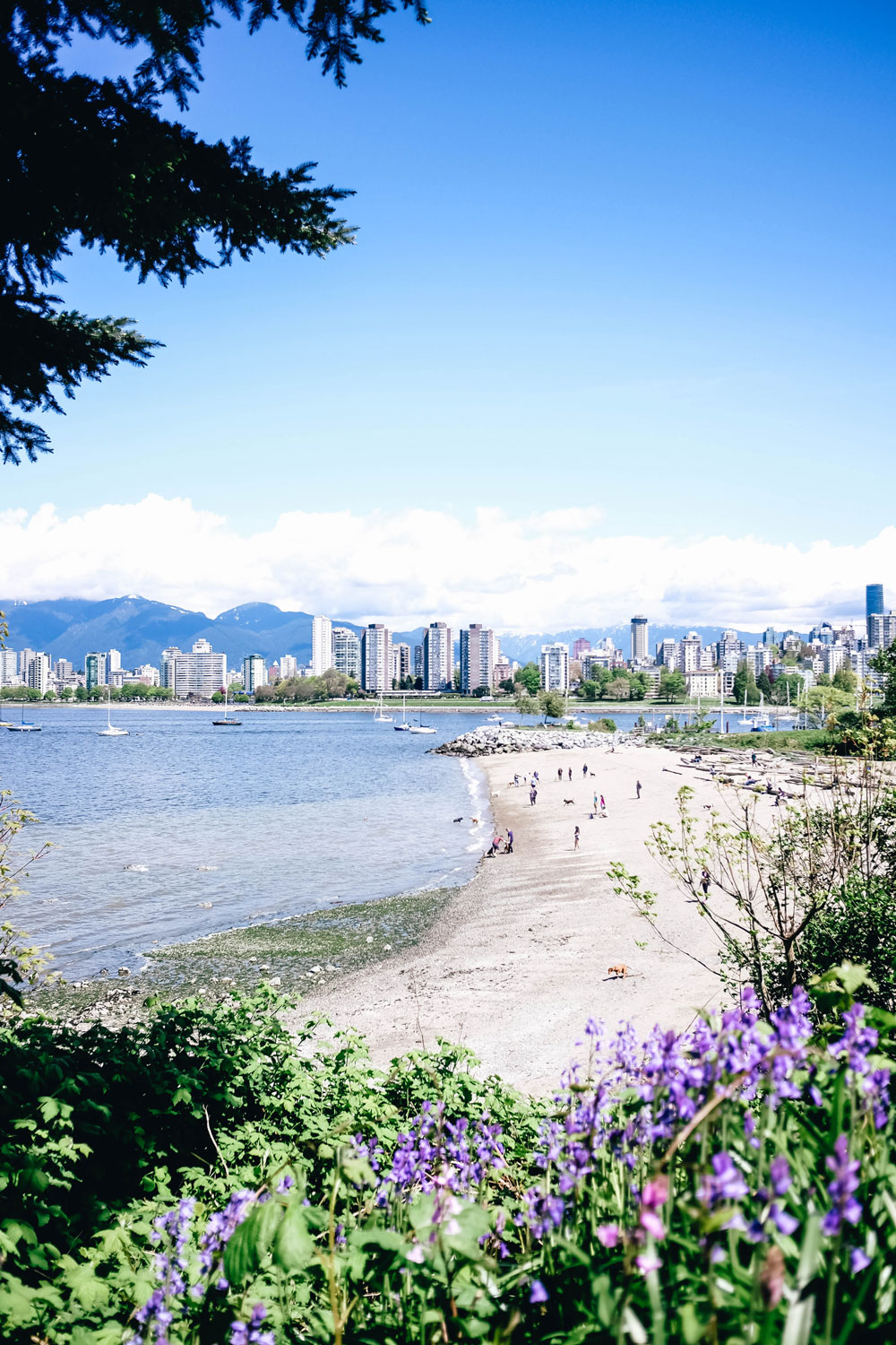photography tips for beginners, best views in vancouver, what to see in vancouver, what to do in vancouver, best coffee shops in vancouver, vancouver travel guide by To Vogue or Bust