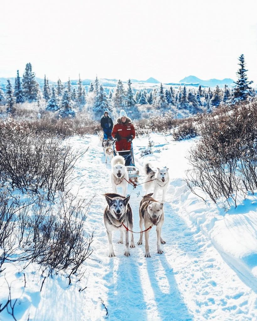 Dog sledding in the Yukon Canada